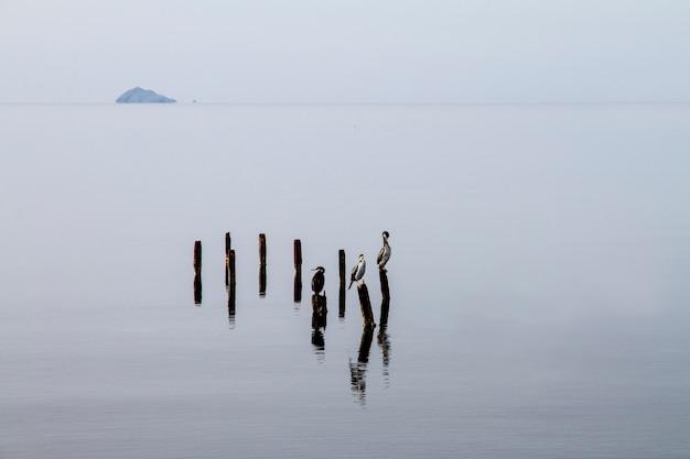 Tre cormorani appollaiati su pali che emergono dall'acqua piatta attendono pazientemente di catturare un pesce