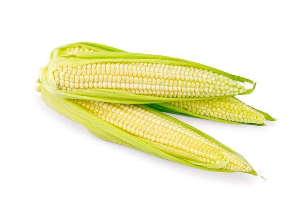 Tre pannocchie di mais con guscio purificato isolato su sfondo bianco