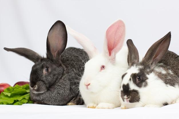 Tre simpatici conigli neri, rossi marroni e grigi isolati su sfondo bianco