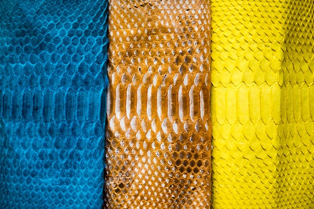 Tre diversi toni della superficie della pelle di pitone dipinta alla moda