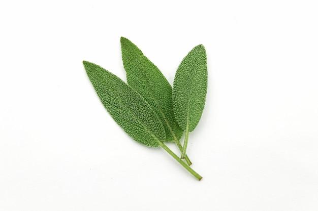 Tre foglie fresche di salvia verde isolato sul muro bianco.