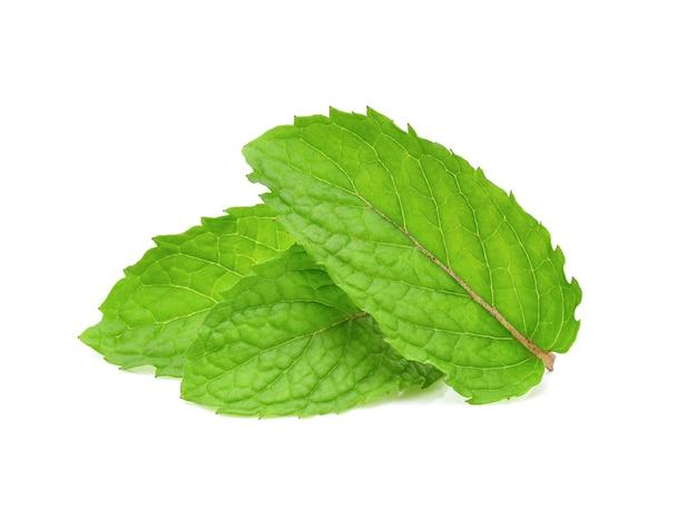 Tre foglie di menta fresca isolati su sfondo bianco.