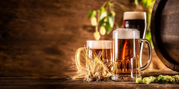 Tre bicchieri di birra alla spina davanti a una botte di legno. decorazione di spighe d'orzo e luppoli freschi.