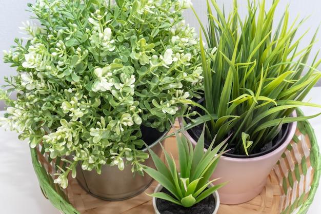 Una composizione di tre piante verdi in canestro di vimini