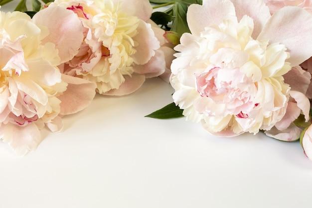 Tre grandi fiori di peonia rosa beige su sfondo di carta chiara con spazio per il testo