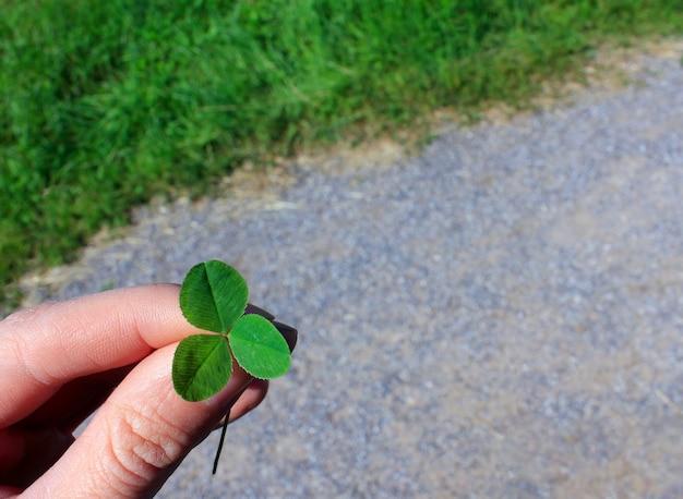 Trifoglio a tre foglie in mano. concetto di cura dell'ambiente e il giorno di san patrizio.