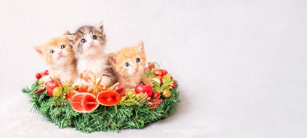 Tre piccoli divertenti gattini rossi e grigi fanno capolino da una ghirlanda di natale su uno sfondo chiaro.