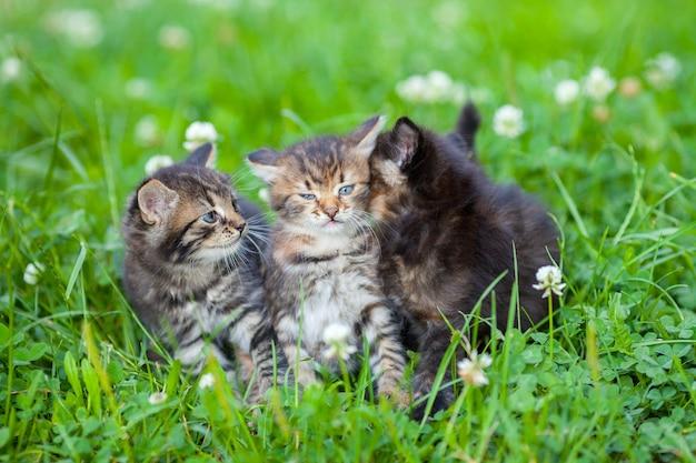Tre piccoli gattini seduti sull'erba