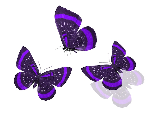 Tre farfalle viola isolate su uno sfondo bianco. foto di alta qualità