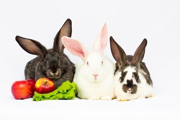 Tre conigli con mele isolate su uno sfondo bianco.