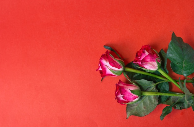 Tre rose giacciono su uno sfondo rosso vista dall'alto.