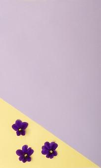 Tre piccoli fiori viola nell'angolo con un grande spazio di copia concetto di primavera