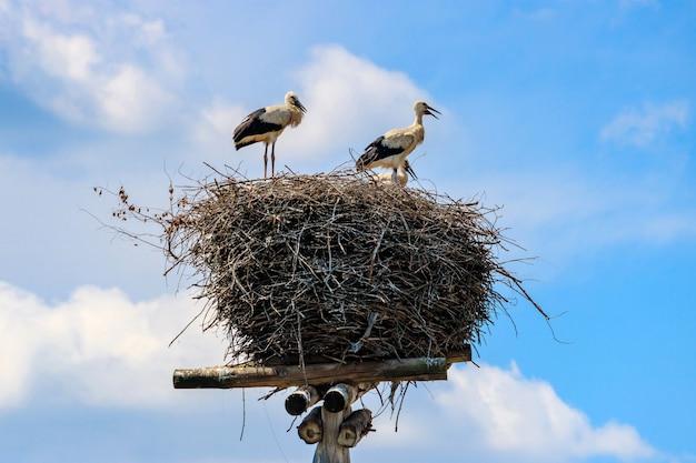 Tre cicogne in un nido di rami su un palo di legno contro il cielo blu