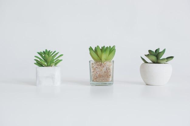 Tre succulente con diversi vasi isolati su sfondo bianco