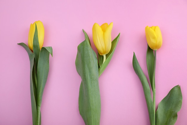 Tre tulipani.