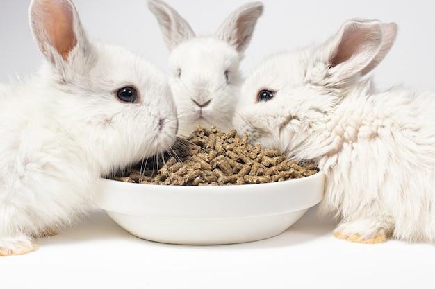 Tre piccoli conigli bianchi mangiano mangime da un piatto su uno sfondo bianco.
