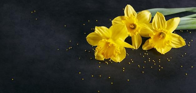 Tre narcisi gialli su sfondo scuro. sfondo primaverile con fiori e puntini gialli. Foto Premium