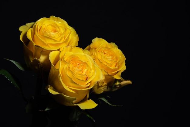 Tre rose gialle su un primo piano nero del fondo
