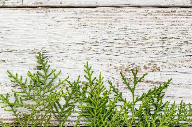 Ramoscelli di thuja su legno