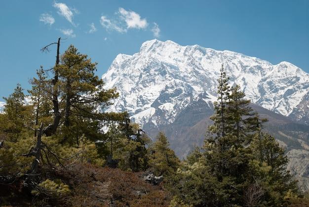 Strada tibetana con abeti in montagna himalayana e cielo blu.