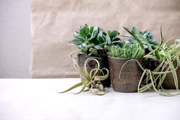 Tillandsia aria e diverse piante grasse eonium, cactus in vasi di ceramica in piedi sul tavolo di marmo bianco. hobby pandemici, piante d'appartamento verdi, piante urbane