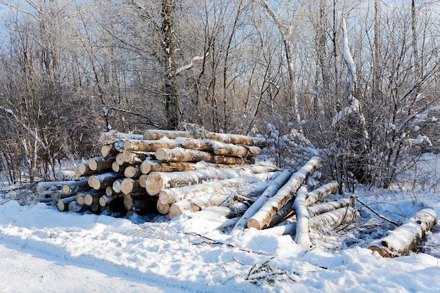 Legname nella stagione invernale.