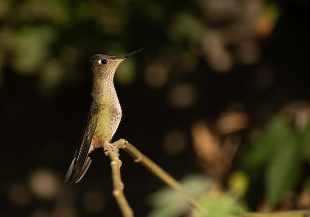 Piccolo colibrì su un bastone da vicino