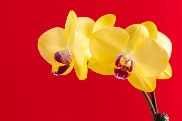 Fiori minuscoli dell'orchidea sulla fine rossa del fondo su
