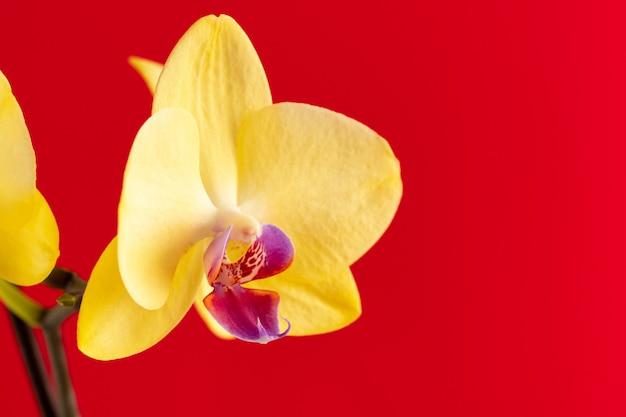 Piccoli fiori di orchidea sulla superficie rossa