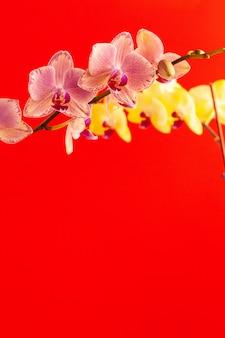 Fiori minuscoli dell'orchidea sulla parete rossa