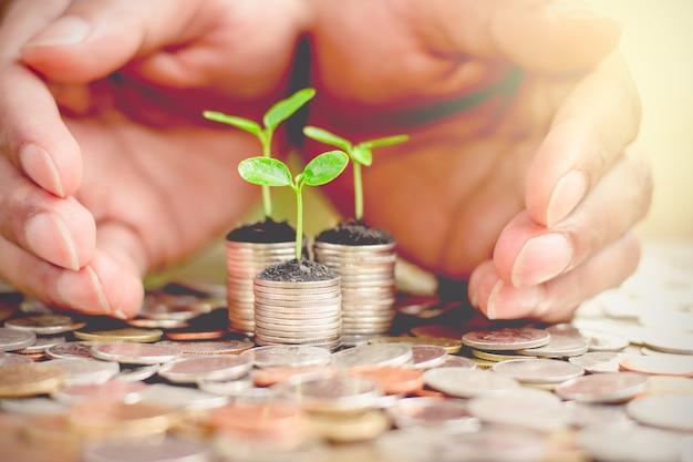 Piante minuscole che crescono sopra le monete dei soldi