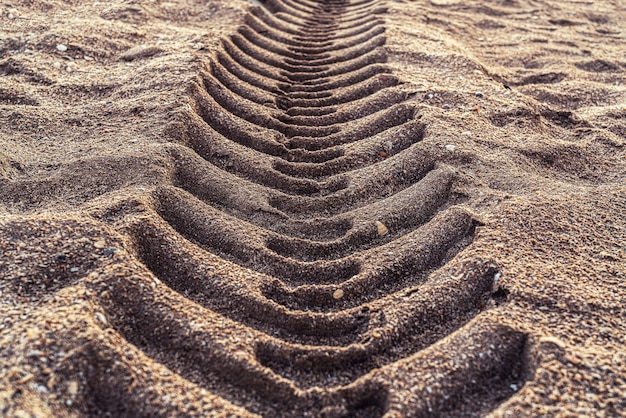 Segni del battistrada sulla sabbia