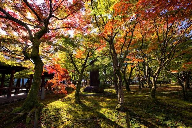 Giardino del tempio tofuku-ji con santuario in pietra e colori del fogliame autunnale contro la luce del sole, kyoto