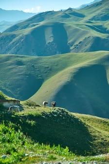 Distretto del passo toguz-toro della regione di jalal-abad nel kirghizistan occidentale