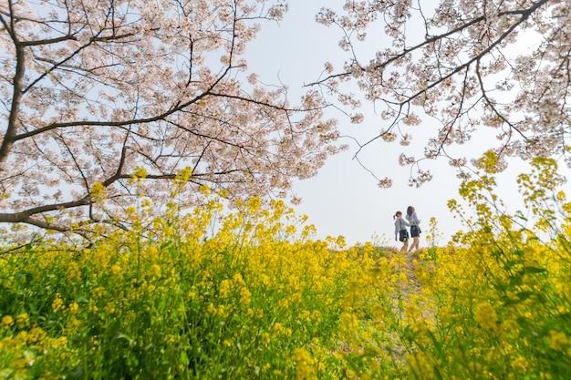 Tokyo, giappone - 30 marzo 2018: la gente va in barca e si diverte a kumagaya per vedere le ciliegie sakura