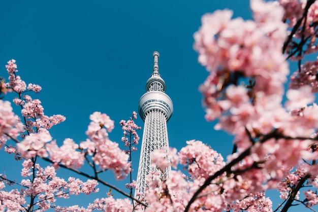 Tokyo skytree con sfondo sakura