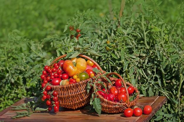 Pomodori in un canestro su bokeh sfocato astratto.