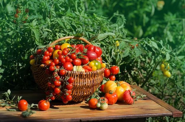 Pomodori in un cesto su sfondo sfocato. pomodori rossi in un cestino.