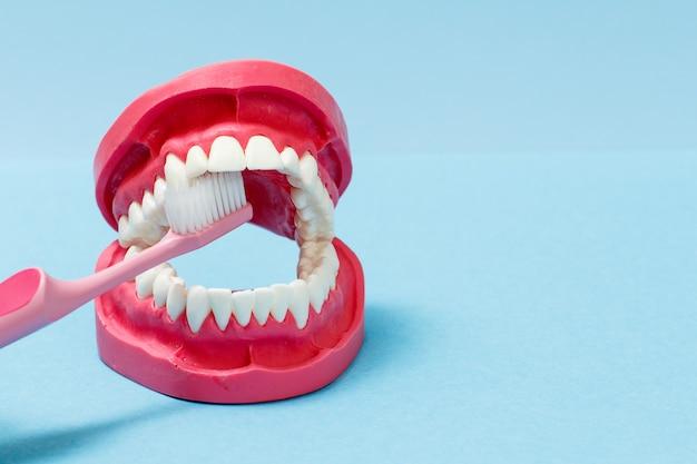 Spazzolino da denti e layout della mascella umana su sfondo blu.