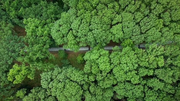 Vista aerea dall'alto di un treno a scartamento ridotto che si muove attraverso una bellissima foresta verde estiva.