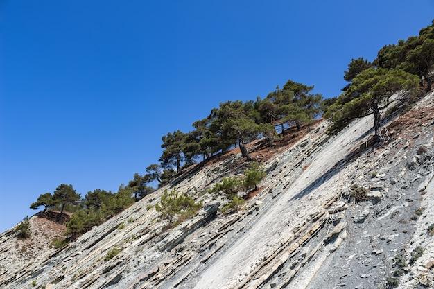 Cima di una scogliera con alberi contro un cielo blu brillante nella zona della spiaggia selvaggia.