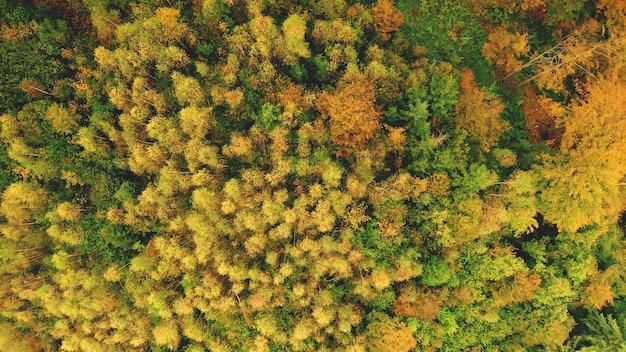 Dall'alto verso il basso la foresta del sole aerea sulla collina di montagna nessuno natura paesaggio in autunno giornata di sole monte verde