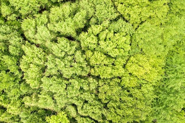 Vista aerea dall'alto verso il basso della foresta estiva verde con tettoie di molti alberi freschi.