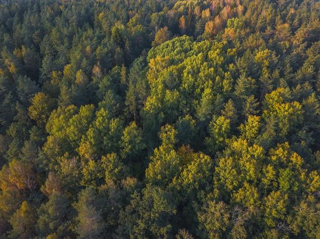 Cima della foresta nella luce del tramonto
