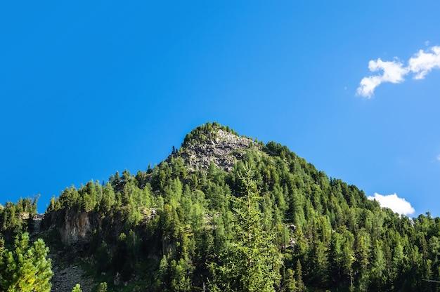 Cima delle montagne nel cielo blu. la montagna ricoperta di abeti. collina verde contro un cielo azzurro con nuvole bianche