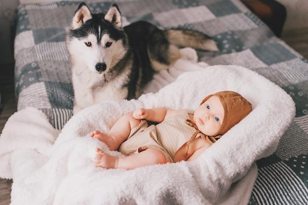 Top ritratto di neonato sdraiato nel passeggino sul letto insieme a cucciolo di husky a casa.