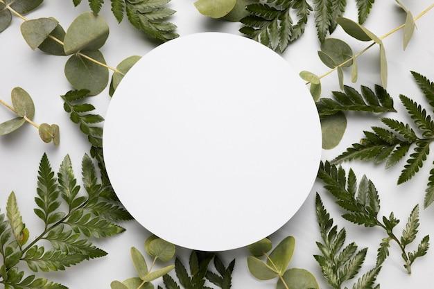 Vista dall'alto assortimento di foglie verdi con cornice Foto Premium