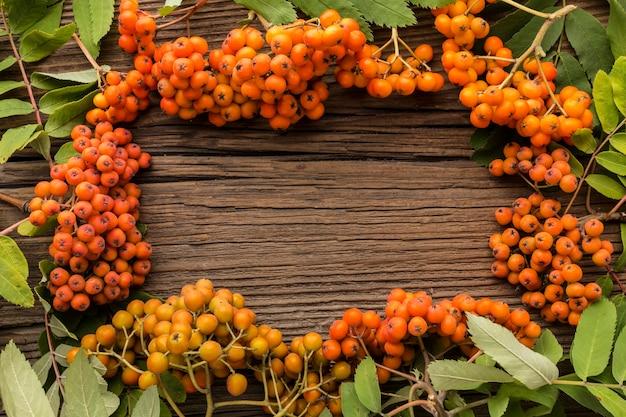 Vista dall'alto del telaio autunno olivello spinoso
