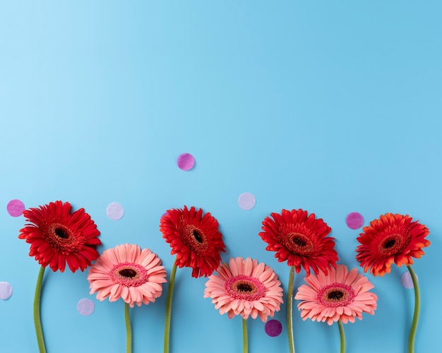 Vista dall'alto di bellissimi fiori