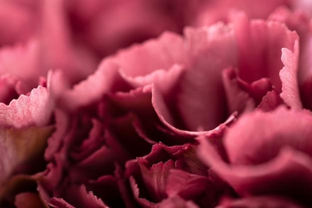Vista dall'alto di bellissimi fiori di colore rosso